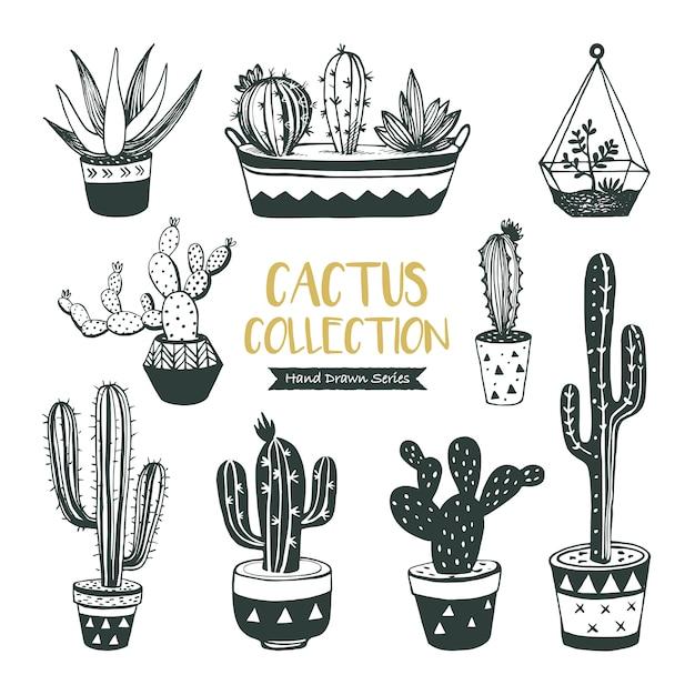Collection De Cactus Et De Plantes Succulentes Dessinés à La Main Vecteur Premium