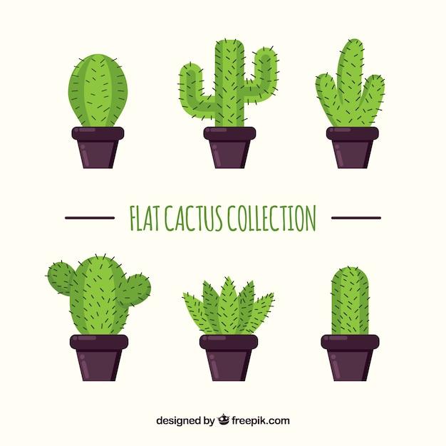 Collection catus avec design plat Vecteur gratuit