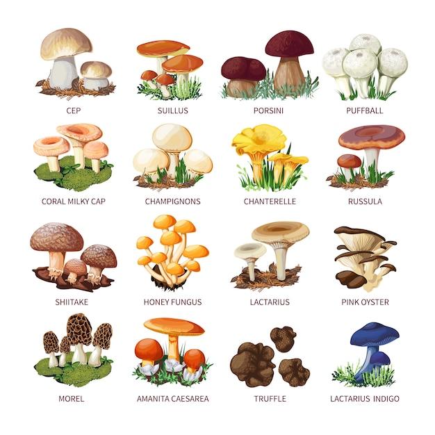 Collection de champignons comestibles et tabourets Vecteur Premium