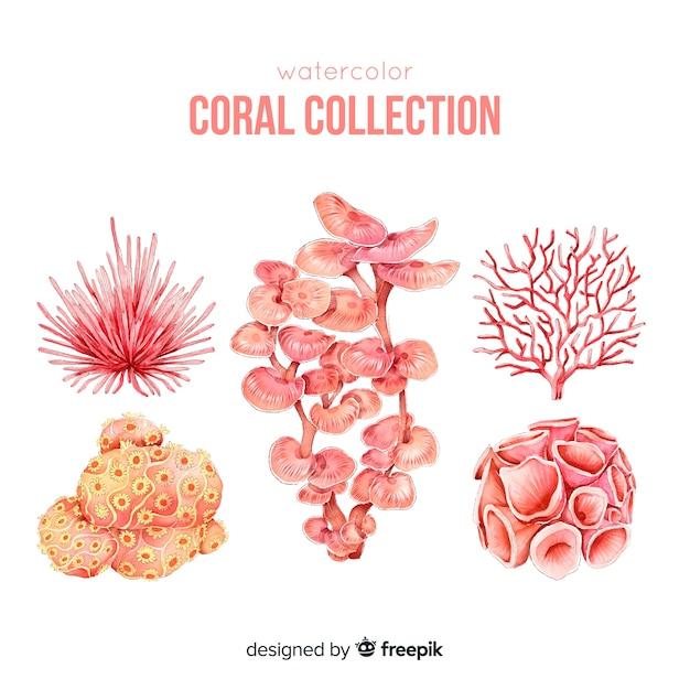 Collection de coraux colorés dessinés à la main Vecteur gratuit