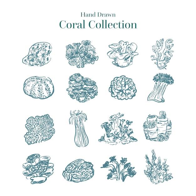 Collection de coraux incolores dessinés à la main Vecteur gratuit