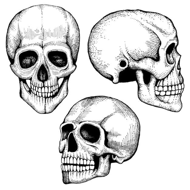 Collection de crânes humains effrayants dessinés à la main vector mort Vecteur Premium