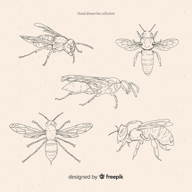Collection de croquis d'insectes dessinés à la main Vecteur gratuit