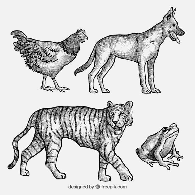 Collection de croquis d 39 animaux t l charger des vecteurs - Croquis animaux ...