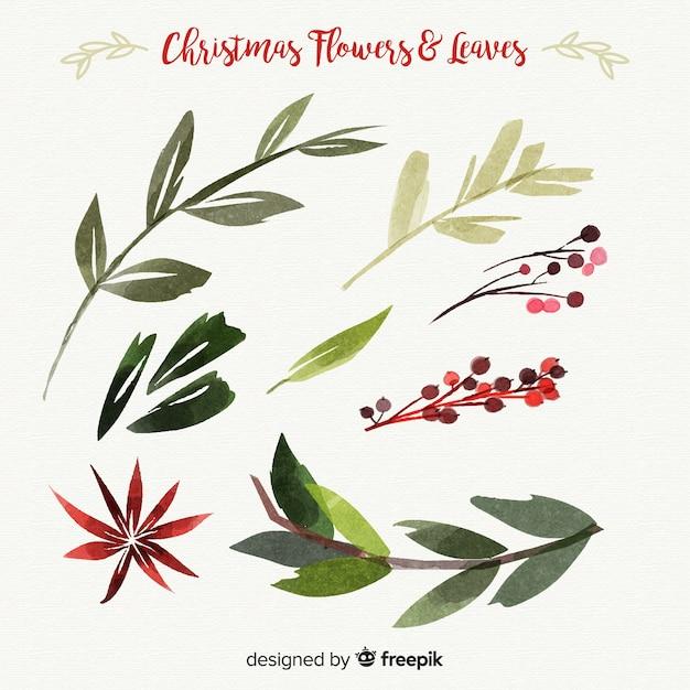 Collection de feuilles et de fleurs de Noël aquarelles Vecteur gratuit