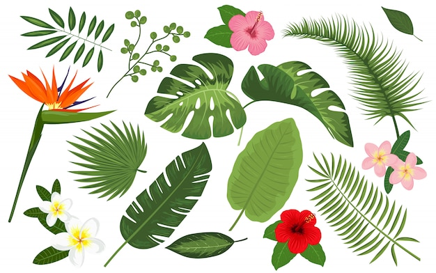 collection de plantes tropicales et de fleurs exotiques t l charger des vecteurs premium. Black Bedroom Furniture Sets. Home Design Ideas