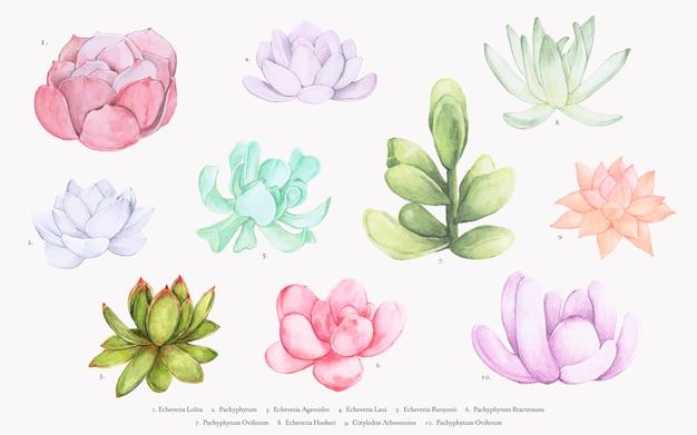 Collection de diverses succulentes dessinées à la main Vecteur gratuit