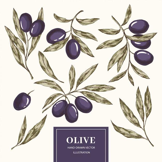 Collection d'éléments d'olive Vecteur Premium