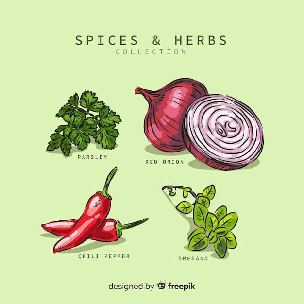 Collection d'épices et d'herbes Vecteur gratuit