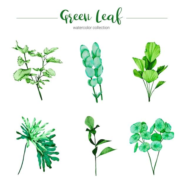 Collection De Feuille Verte Illustration Aquarelle Vecteur gratuit