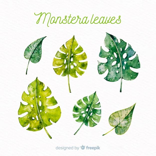 Collection de feuilles d'aquarelle monstera Vecteur gratuit