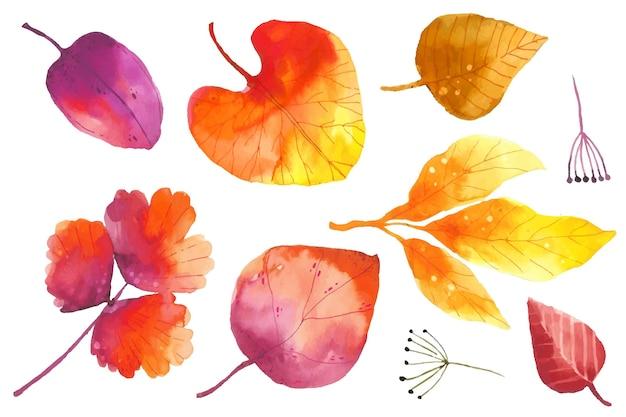 Collection De Feuilles D'automne Aquarelle Vecteur gratuit