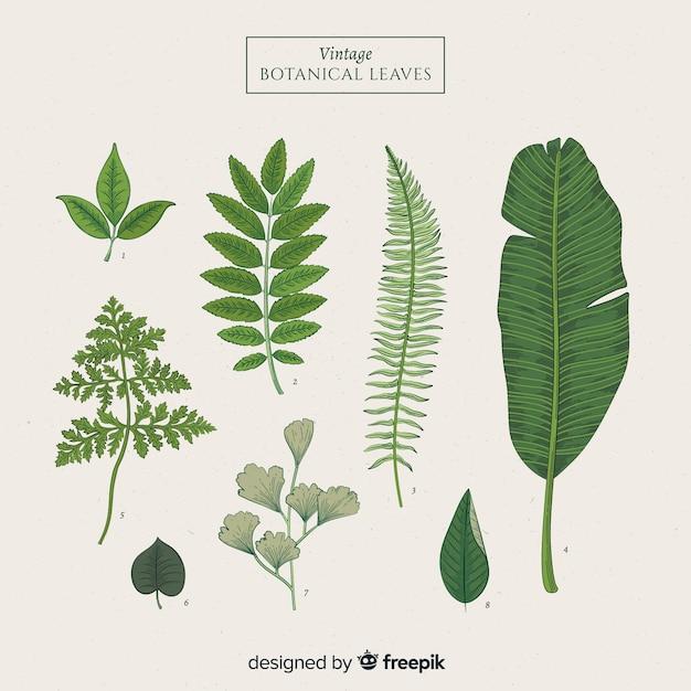 Collection de feuilles botaniques vintage Vecteur gratuit