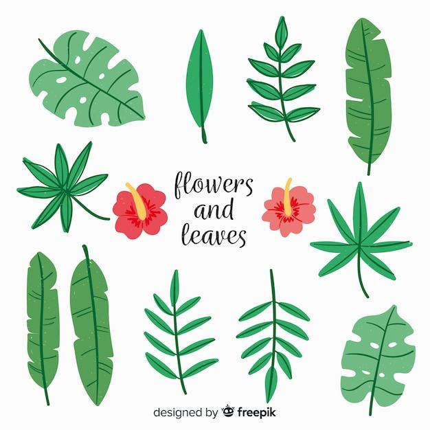 Collection de feuilles et de fleurs dessinées à la main Vecteur gratuit