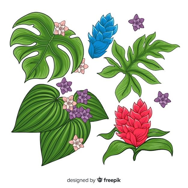 Collection de feuilles et de fleurs tropicales Vecteur gratuit