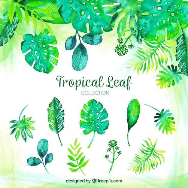 Collection de feuilles tropicales aquarelle classique Vecteur gratuit