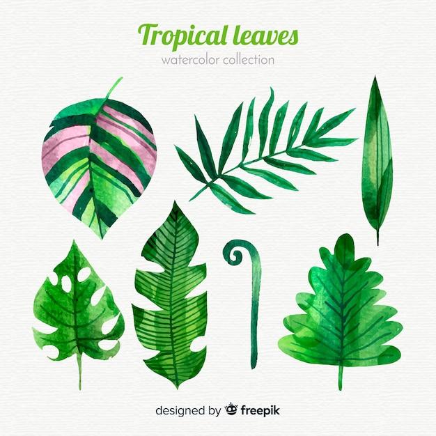 Collection de feuilles tropicales aquarelle élégante Vecteur gratuit