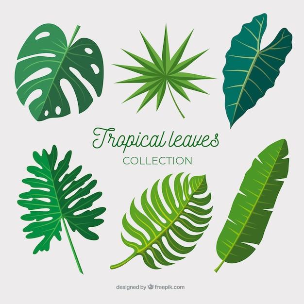 Collection de feuilles tropicales au design plat Vecteur gratuit
