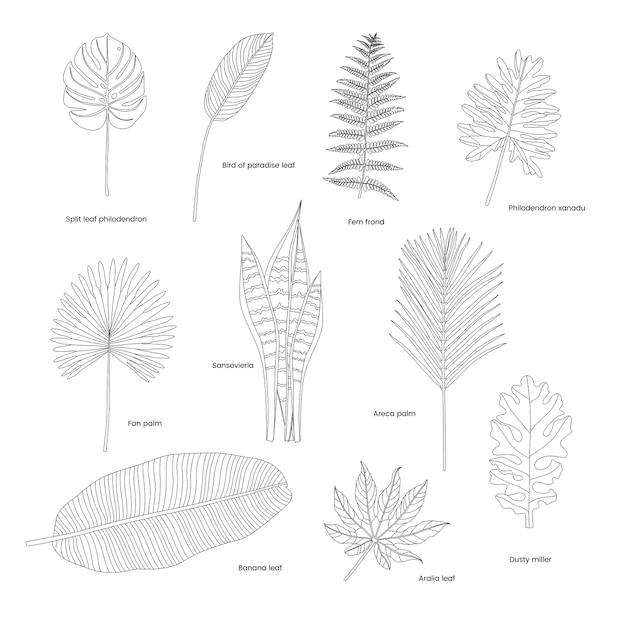 Collection de feuilles tropicales illustrées Vecteur gratuit