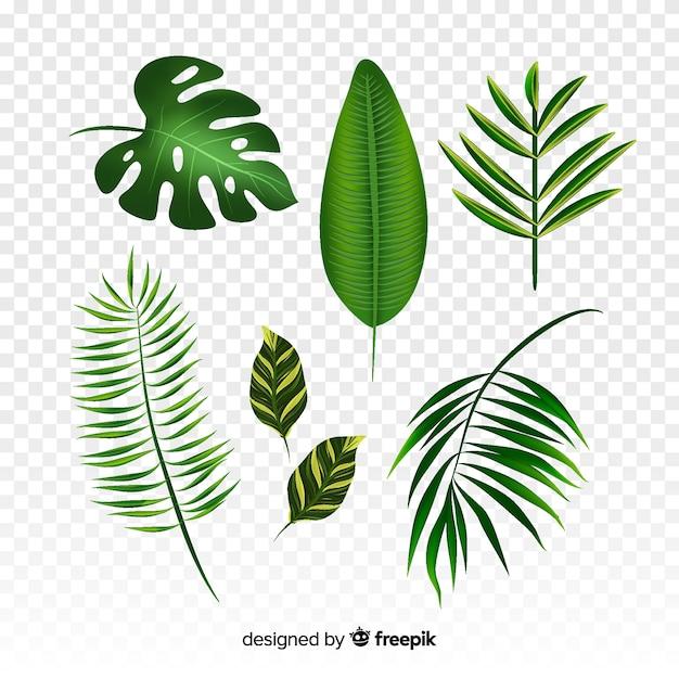 Collection de feuilles tropicales réalistes Vecteur gratuit