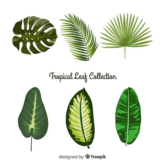 Collection de feuilles tropicales Vecteur gratuit