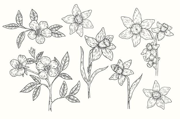 Collection de fleurs botanique vintage dessinés à la main réaliste Vecteur gratuit