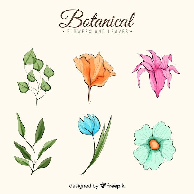 Collection de fleurs botaniques aquarelles Vecteur gratuit