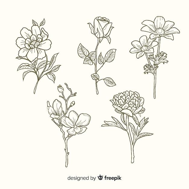 Collection De Fleurs Botaniques Dessinés à La Main Réaliste Vecteur gratuit
