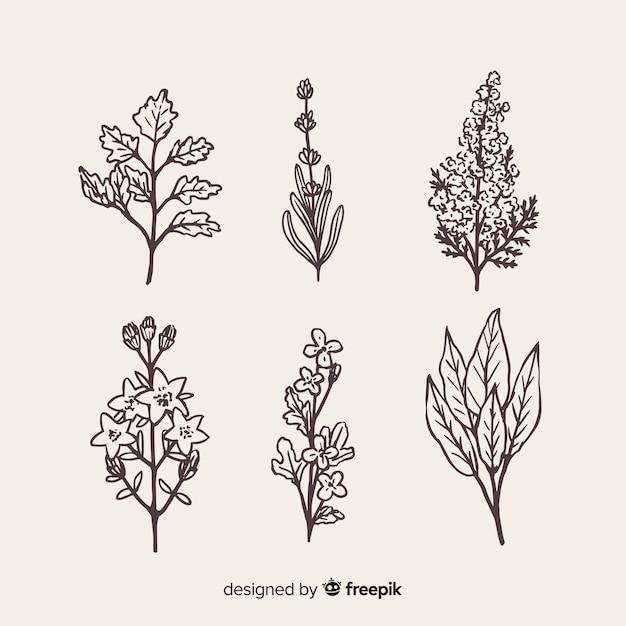 Collection de fleurs dessinées à la main réaliste Vecteur gratuit