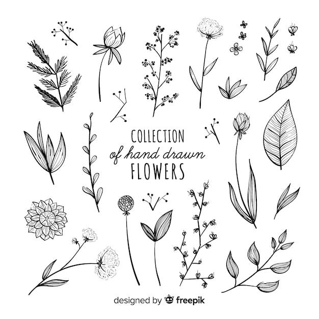 Collection De Fleurs Dessinées à La Main Vecteur gratuit