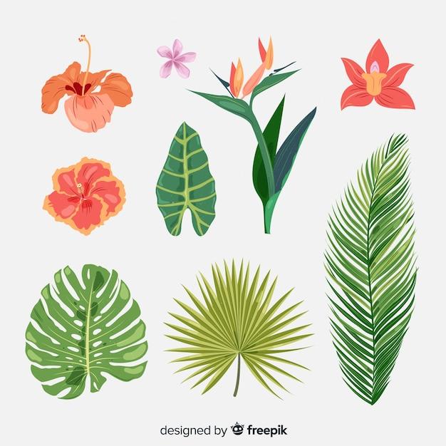 Collection de fleurs et feuilles tropicales Vecteur gratuit