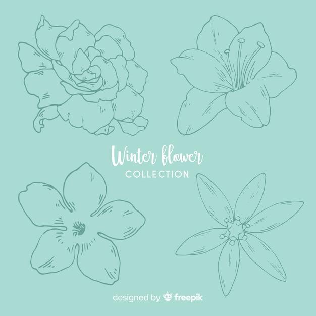 Collection de fleurs d'hiver Vecteur gratuit