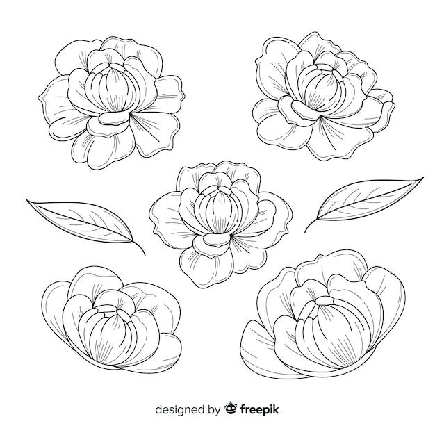 Collection De Fleurs De Pivoine Dessinés à La Main Vecteur gratuit