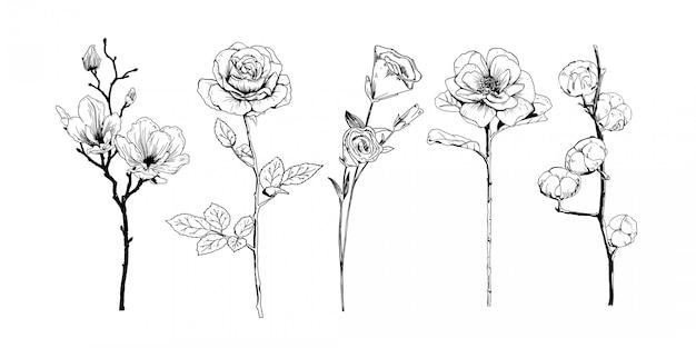 Collection De Fleurs Réalistes Dessinées à La Main Vecteur Premium