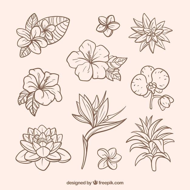 Collection de fleurs tropicales dessinés à la main belle Vecteur gratuit