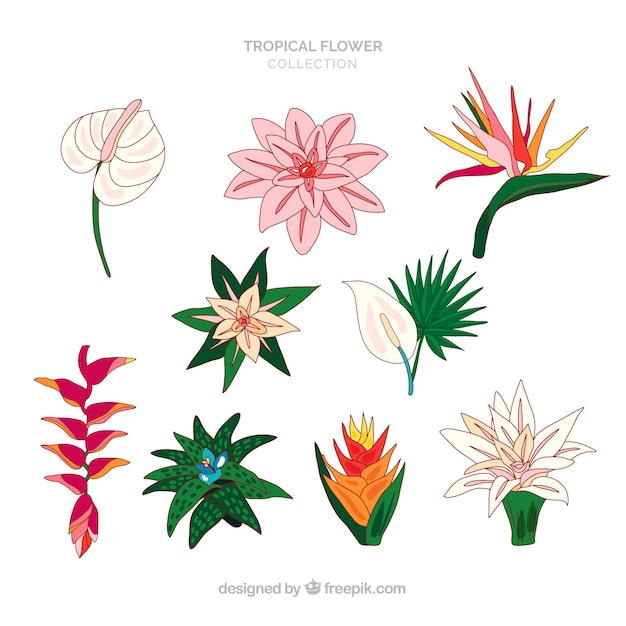 Collection de fleurs tropicales dessinés à la main belle Vecteur gratuit