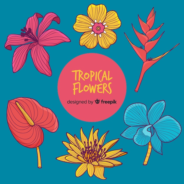 Collection de fleurs tropicales Vecteur gratuit