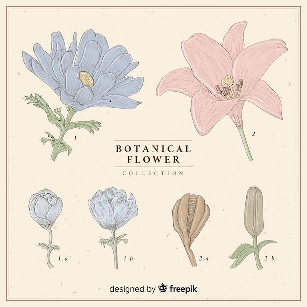 Collection de fleurs vintage Vecteur gratuit