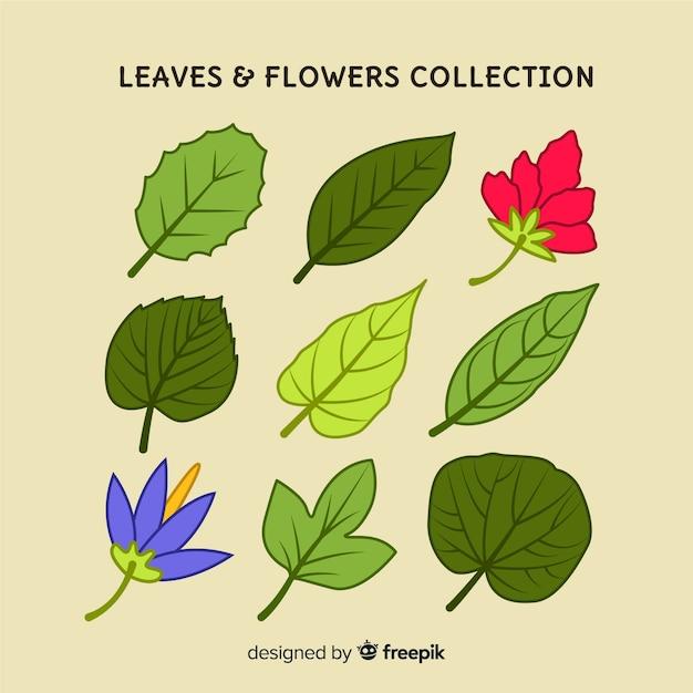 Collection florale dessinée à la main Vecteur gratuit