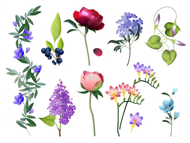 Collection Florale. Fleurs De Mariage Avec Des Feuilles Vector Ensemble De Photos Botaniques De Fleurs Colorées Vecteur Premium