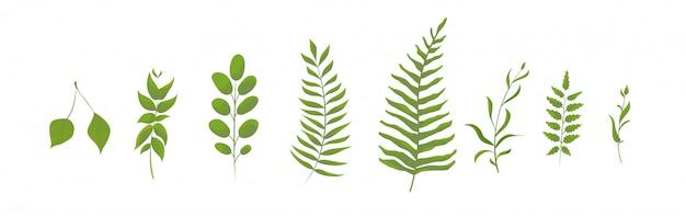 Collection de fougères de la forêt verte. feuilles Vecteur Premium