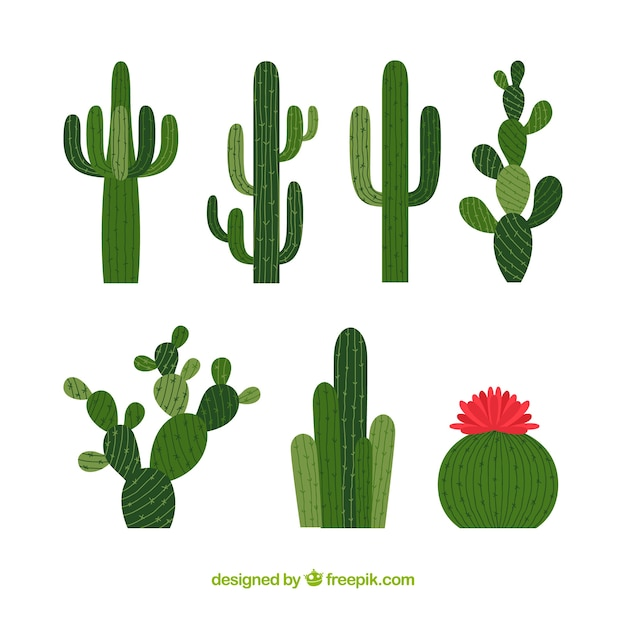 Collection haute cactus Vecteur gratuit