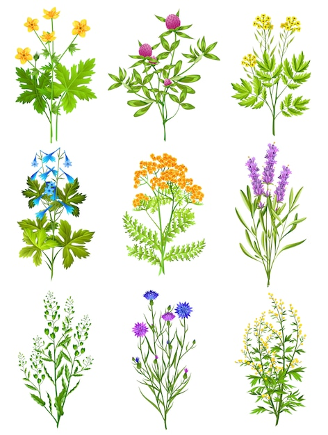 Collection d'herbes sauvages Vecteur gratuit