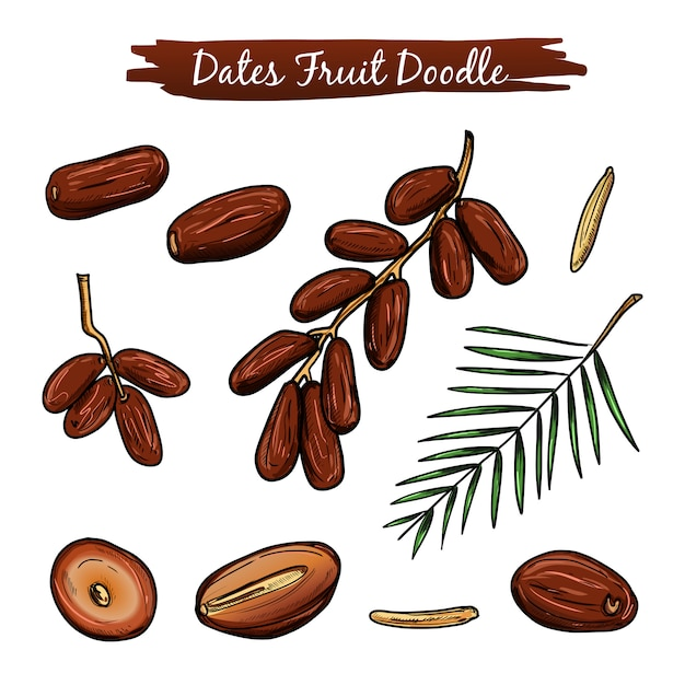 Collection d'illustrations vectorielles de fruits dates. Vecteur Premium