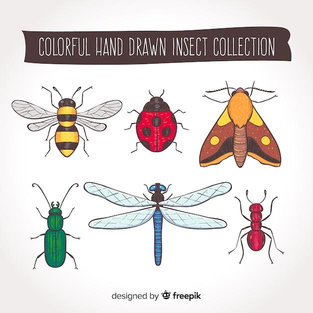 Collection d'insectes dessinés à la main Vecteur gratuit
