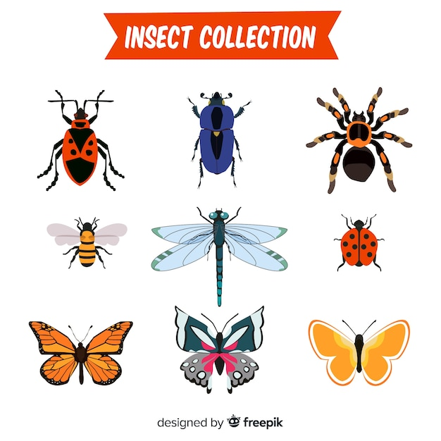 Collection d'insectes dessinés à la main Vecteur gratuit