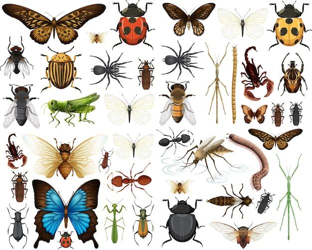 Collection D'insectes Différents Isolé Sur Fond Blanc Vecteur gratuit