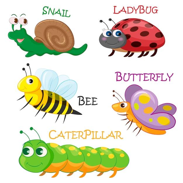 Collection d'insectes printaniers Vecteur Premium