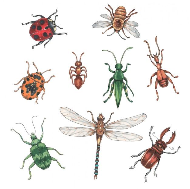 Collection d'insectes Vecteur Premium