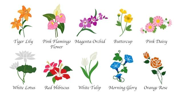 Collection Isolée De Fleurs De Jardin Botanique Nature Organique Vecteur Premium